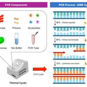 دستگاه PCR و HLCR چیست