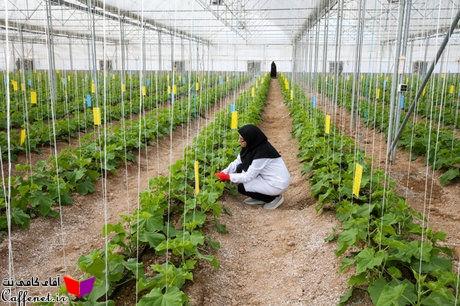 پاورپوینت مدل رایانه ای آبیاری مزارع